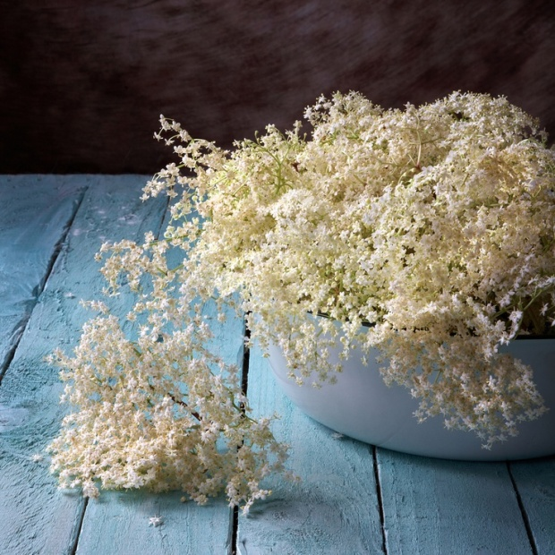 freshly picked elderflowers spilling out of a large enamel bowl